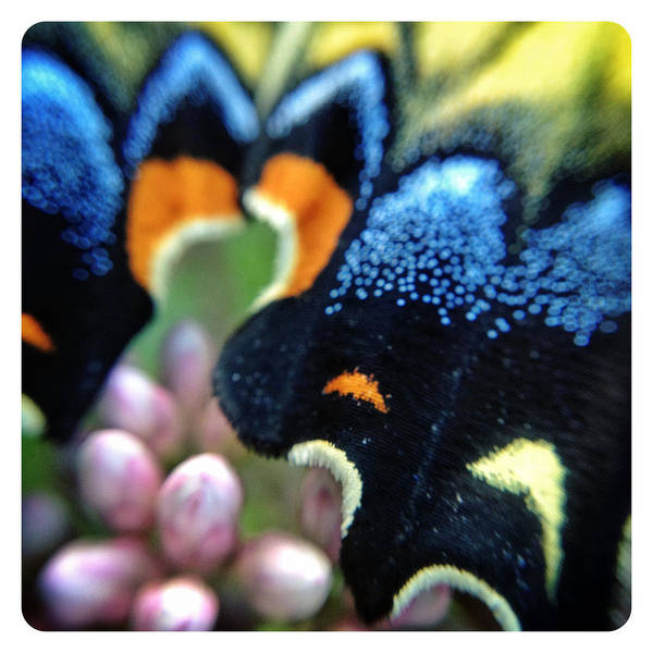 Catskills Photograph - Butterfly Wing by Natasha Marco