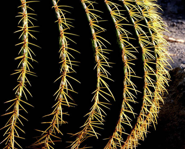 Wall Art - Photograph - Cactus by Mauro Fermariello/science Photo Library