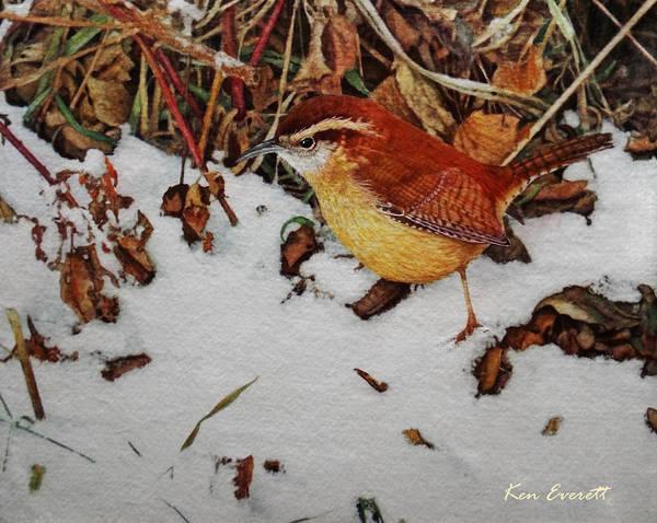 Wren Painting - Carolina Wren by Ken Everett