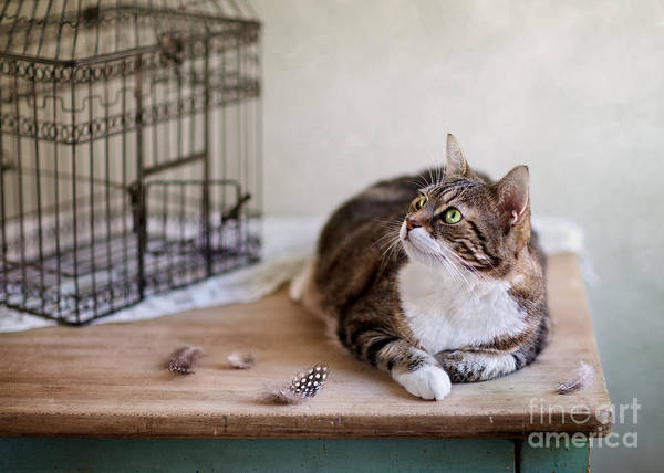 Vogel Photograph - Cat And Bird Cage by Nailia Schwarz