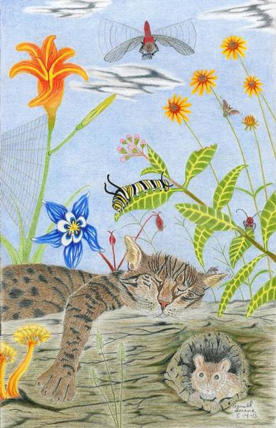 Spider Lily Wall Art - Drawing - Cat And Mouse by Gerald Strine