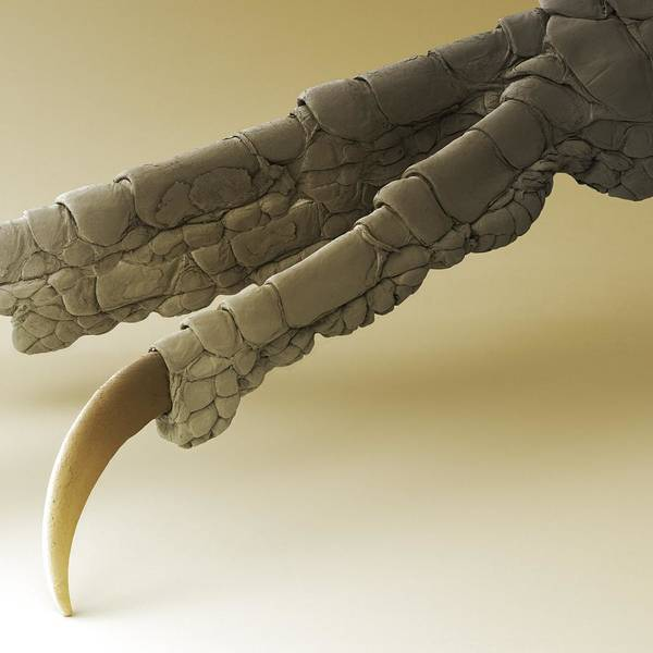 Wall Art - Photograph - Chaffinch Foot, Sem by Power And Syred