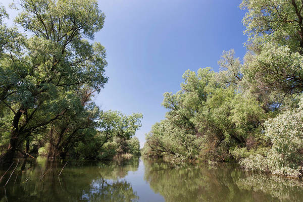 Alder Photograph - Channels And Lakes In The Danube Delta by Martin Zwick