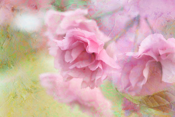 Japanese Poetry Wall Art - Photograph - Cherry Blossom by Heike Hultsch