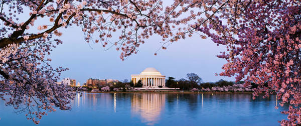 Tidal Basin Photograph - Cherry Blossom Tree With A Memorial by Panoramic Images