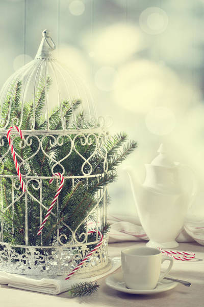 Sweet Bird Photograph - Christmas Birdcage by Amanda Elwell