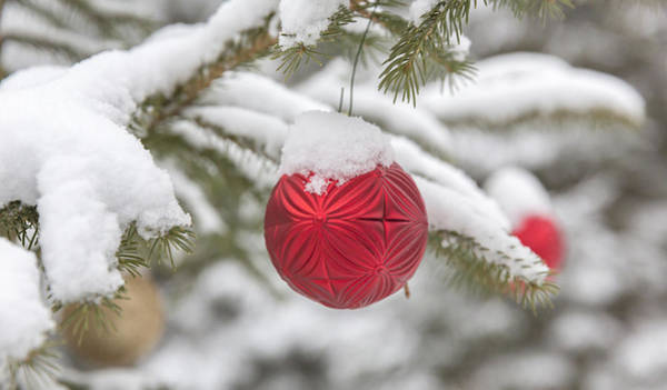 Wall Art - Photograph - Christmas Ornaments On Spruce Tree by Linda Arndt