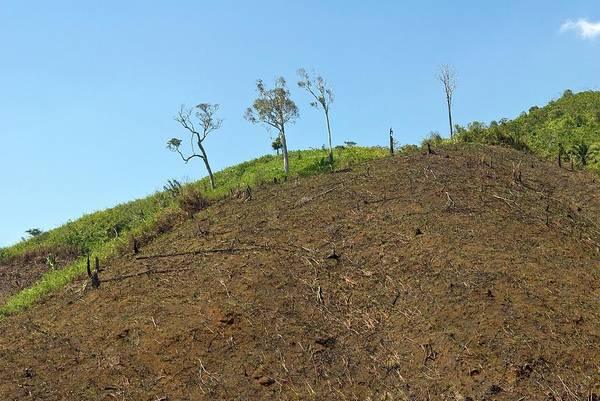 Madagascar Photograph - Cleared Land by Philippe Psaila/science Photo Library