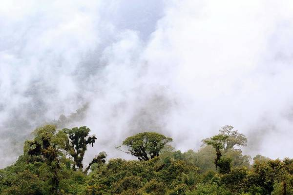 Wall Art - Photograph - Cloud Forest by Dr Morley Read/science Photo Library