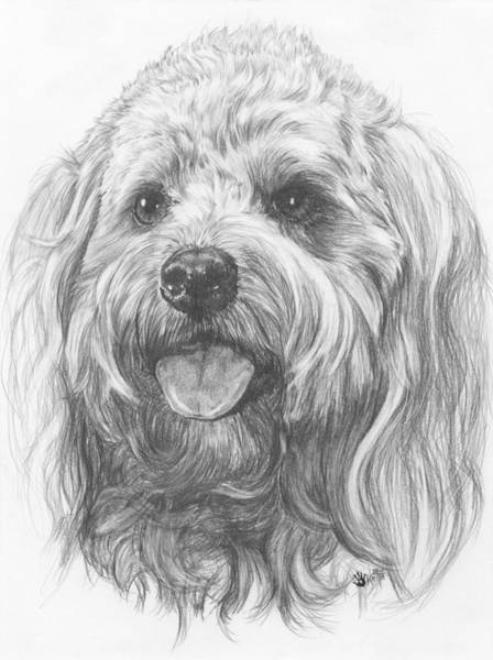 Mutt Drawing - Cock-a-poo by Barbara Keith