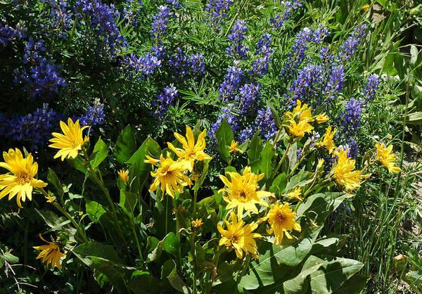 Photograph - Colorado Wildflowers by Lynn Bauer
