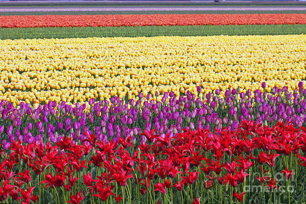 Holland Wall Art - Photograph - Colors Of Holland by Lars Ruecker