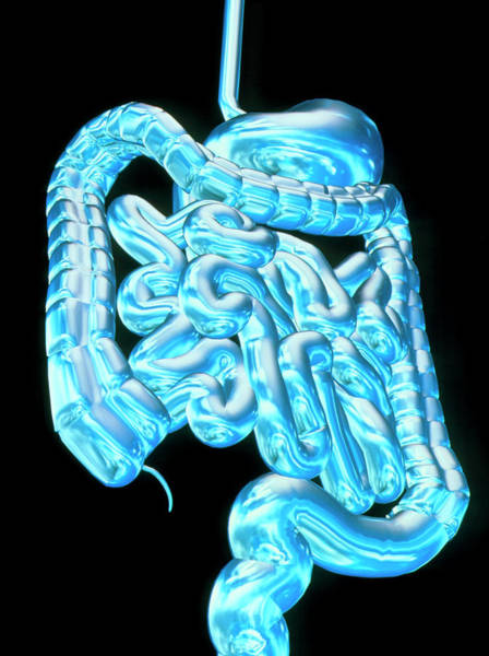 Stomach Photograph - Computer Art Showing The Healthy Digestive System by Alfred Pasieka/science Photo Library