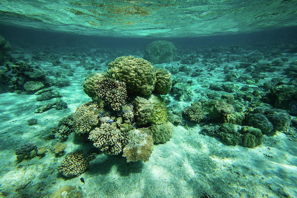 French Polynesia Photograph - Coral Reef In The Pacific Ocean, Bora by Panoramic Images