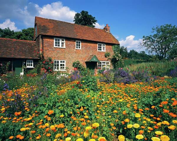 Climbing Plants Photograph - Cottage Garden by Andy Williams/science Photo Library