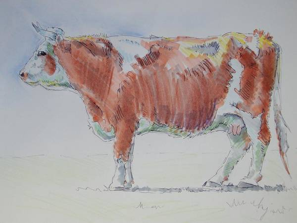 Friesian Drawing - Cow Drawing by Mike Jory