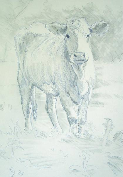 Drawing - Cow by Mike Jory