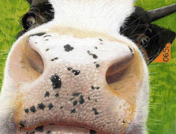 Hereford Bull Painting - Cow No. 0651 by Carol McCarty