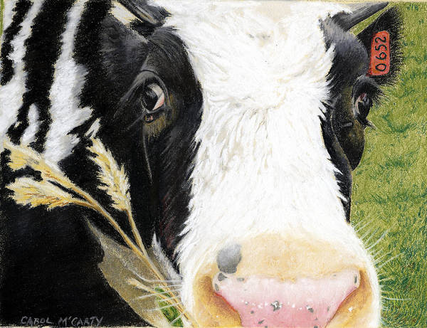 Hereford Bull Painting - Cow No. 0652 by Carol McCarty