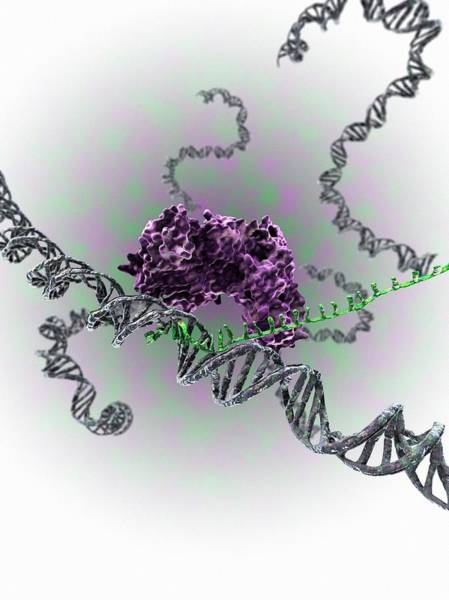 Short Cut Photograph - Crispr-cas9 Gene Editing Complex by Gunilla Elam/science Photo Library