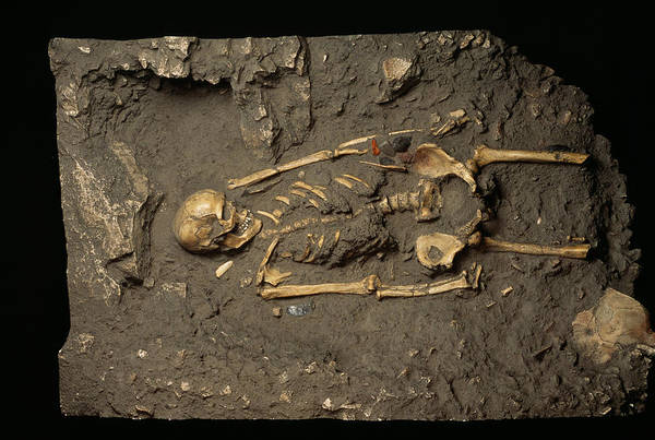 Wall Art - Photograph - Cro-magnon Man Fossil by Pascal Goetgheluck/science Photo Library