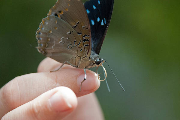 Photograph - Curious Butterfly by Tam Ryan