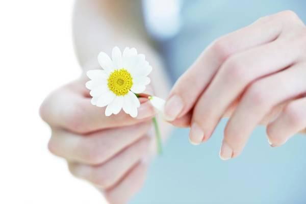 Asteraceae Photograph - Daisy by Ian Hooton/science Photo Library