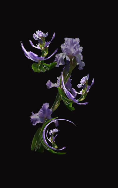 Photograph - Dancing Iris 4 by Jim Baker