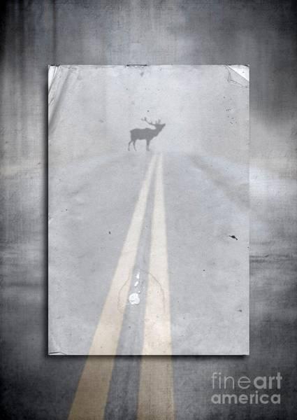 Moose Wall Art - Photograph - Danger Ahead by Edward Fielding