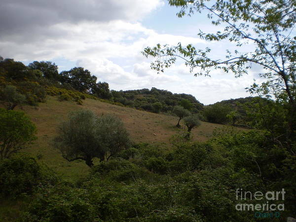 Photograph - Dehesa In Extremadura by Chani Demuijlder