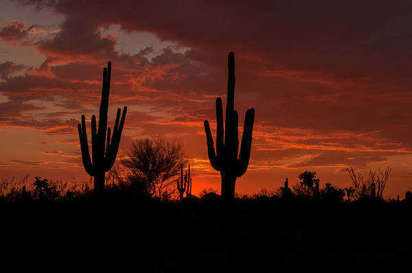 Photograph - Desert Sunset by Tam Ryan