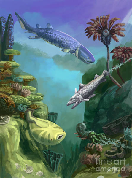 Biota Wall Art - Photograph - Devonian Period by Spencer Sutton