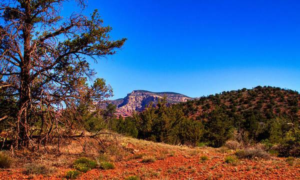 Photograph - Diamondback Gulch Near Sedona Arizona by David Patterson