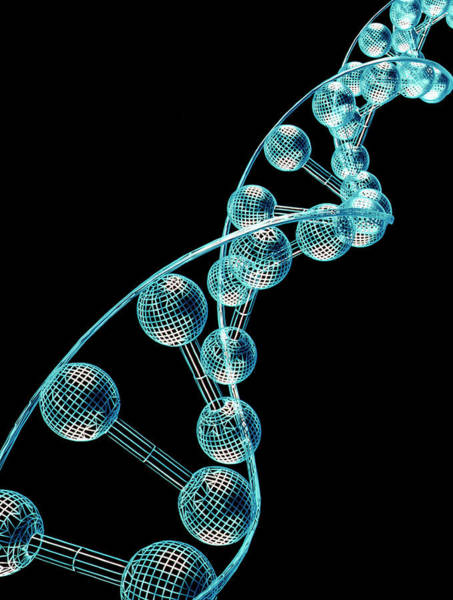 Molecular Wall Art - Photograph - Dna Molecule by Alfred Pasieka/science Photo Library