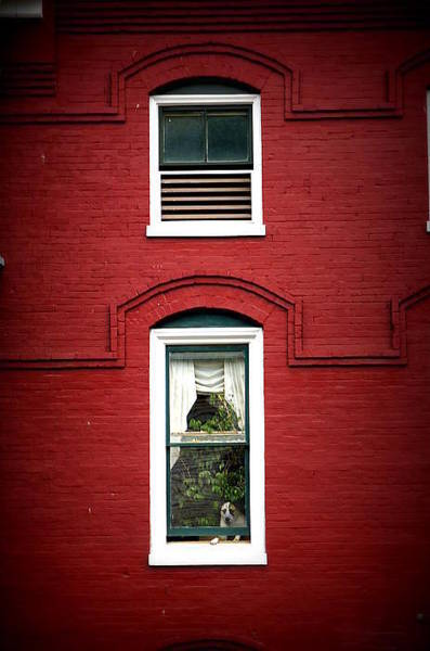 Dog Watch Photograph - Doggie In The Window by Laurie Perry