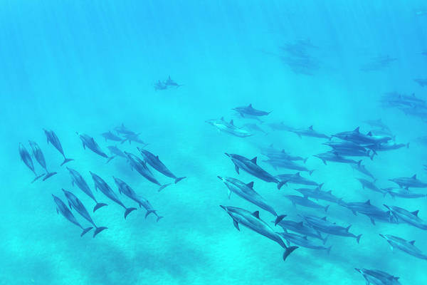 Wall Art - Photograph - Dolphins Swimming In The Ocean, Amazing by Design Pics Vibe
