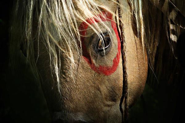Painted Horses Photograph - Eagle Eye by Lyndsey Warren