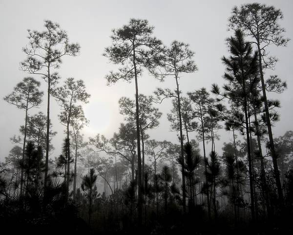 Everglades National Park Photograph - Early Morning Fog Landscape by Rudy Umans