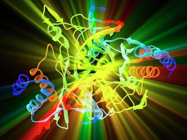 Restriction Photograph - Eco Ri Restriction Enzyme Molecule by Alfred Pasieka/science Photo Library