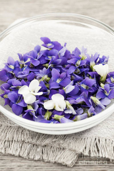 Wall Art - Photograph - Edible Violets In Bowl by Elena Elisseeva