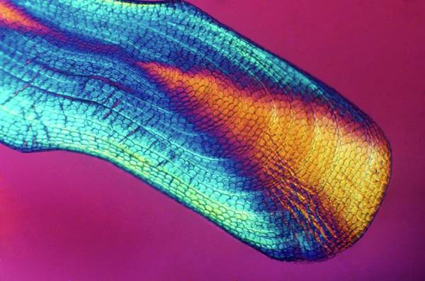 Eels Photograph - Eel Scale by Steve Lowry