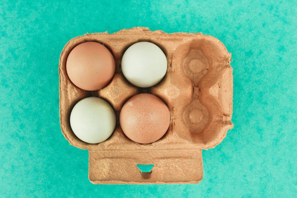 Lively Photograph - Eggs by Tom Gowanlock