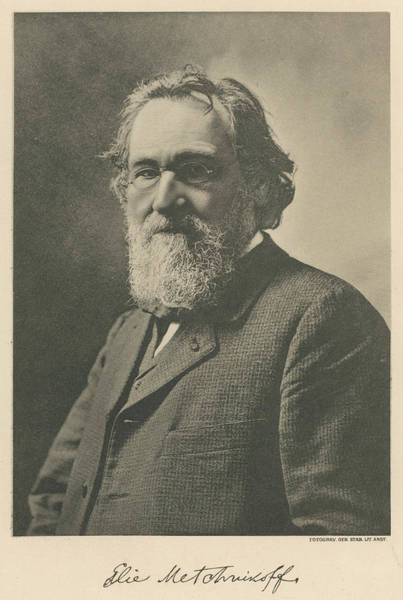 Wall Art - Photograph - Elie Metchnikoff (ilya Ilich Mechnikov) by Mary Evans Picture Library