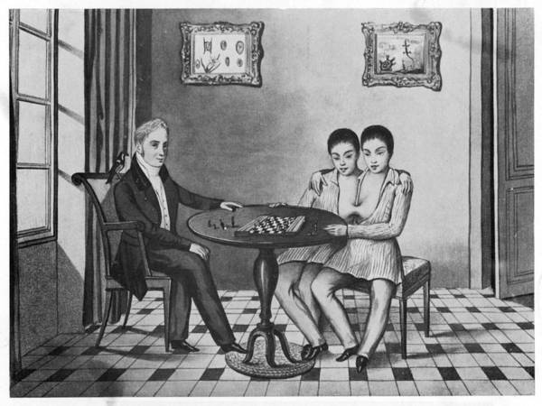 Wall Art - Drawing - Eng And Chang (circa 1814-1874) by Mary Evans Picture Library