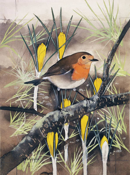European Robin Photograph - European Robin by Natural History Museum, London/science Photo Library
