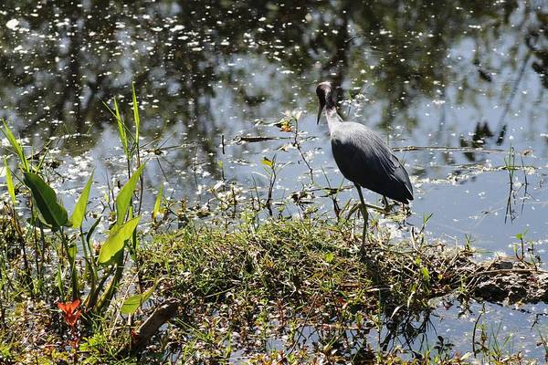 Wall Art - Photograph - Everglades Life by Valia Bradshaw