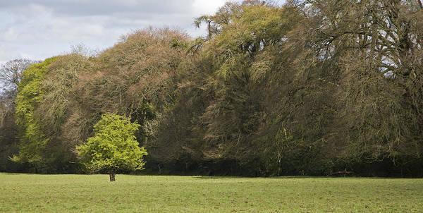 Wall Art - Photograph - Fairy Tree In Ireland by Ian Middleton