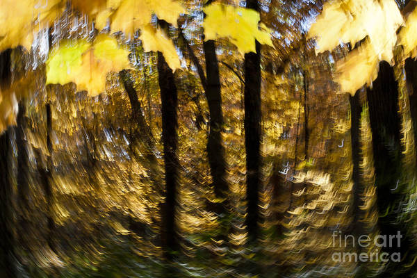Photograph - Fall Abstract by Steven Ralser
