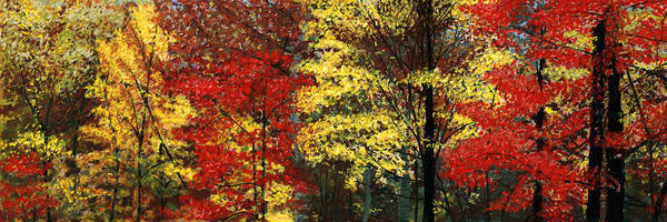 Pastel - Fall Canopy by George Burr