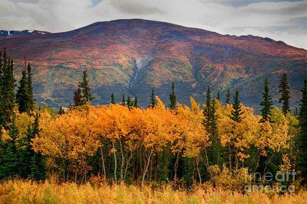 Photograph - Fall Colors by Karla Weber